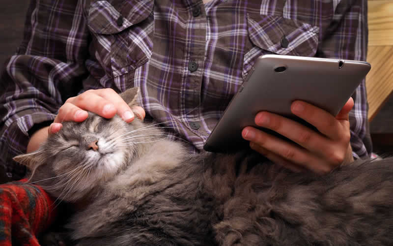 Online appointments at Black Sheep Vets