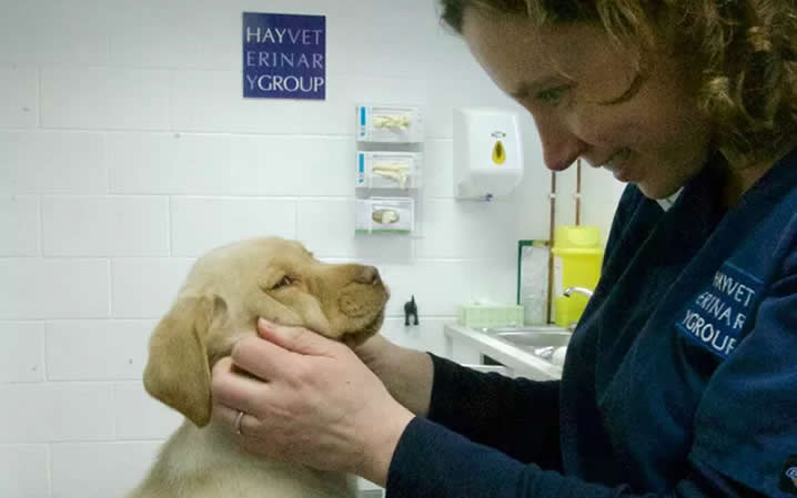vet hay vets with puppy
